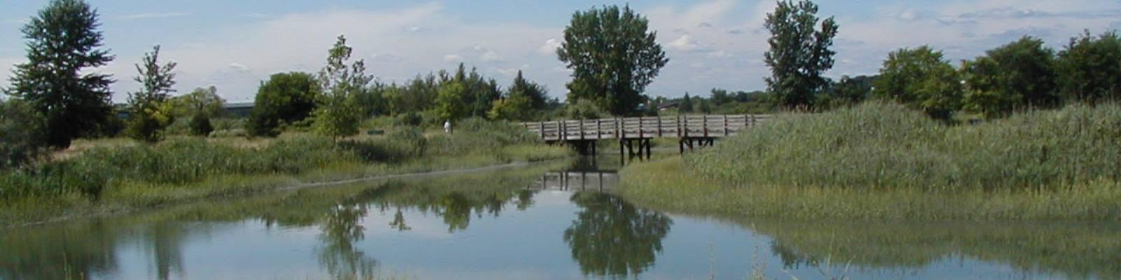 Belle island marsh