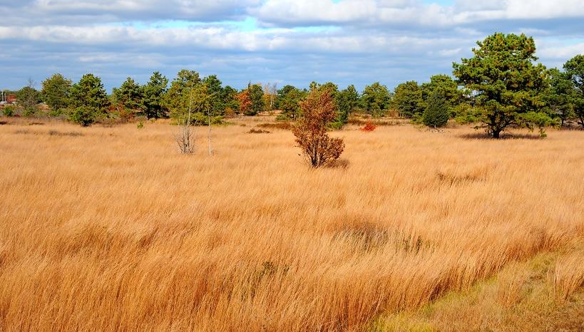grassland habitat management