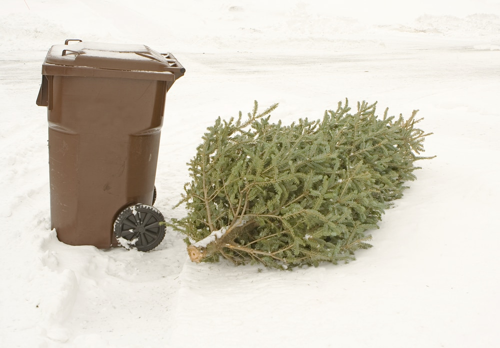 Trash can and Christmas tree ready for curbside disposal