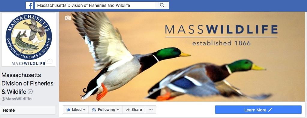 MassWildlife Facebook page