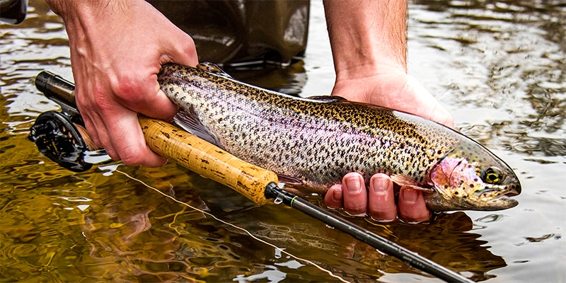 Trout stocking begins soon!