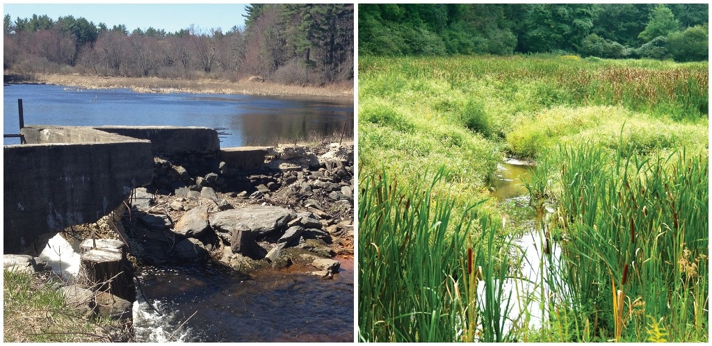 Wekepeke Brook before and after dam removal