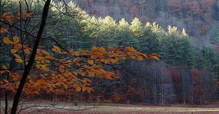 mohawk trail trees