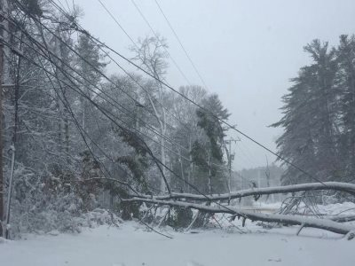 Photo of fallen tree which has taken down power lines.