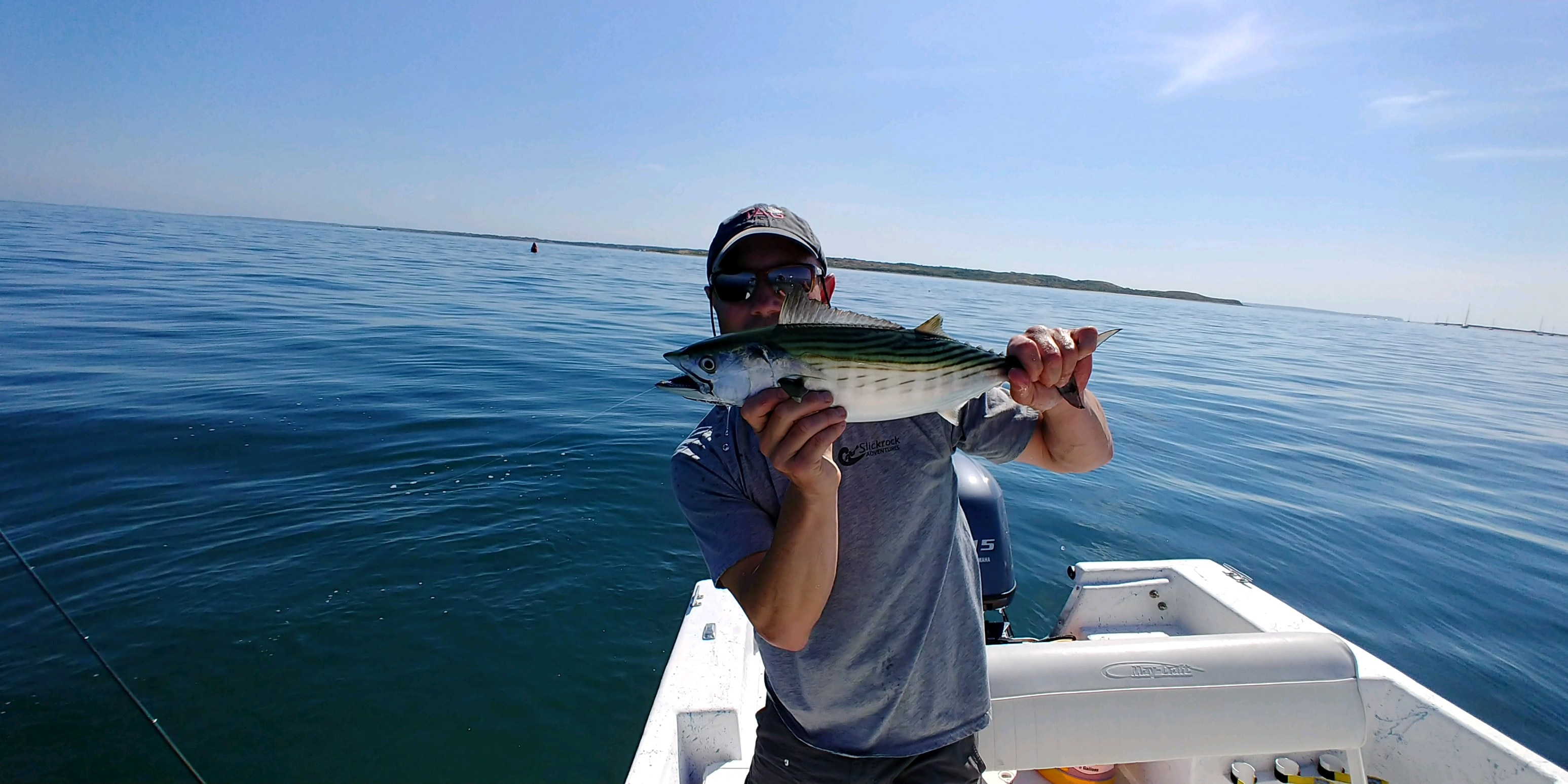 An Atlantic bonito caught by a recreational angler.