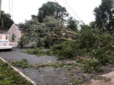 Tree damage from July 23rd Cape Cod tornadoes