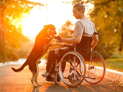 man in wheelchair with dog in the sun