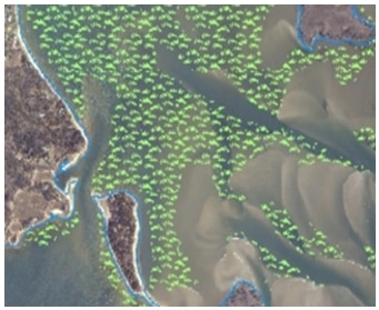 MassDEP Eelgrass Overview Map
