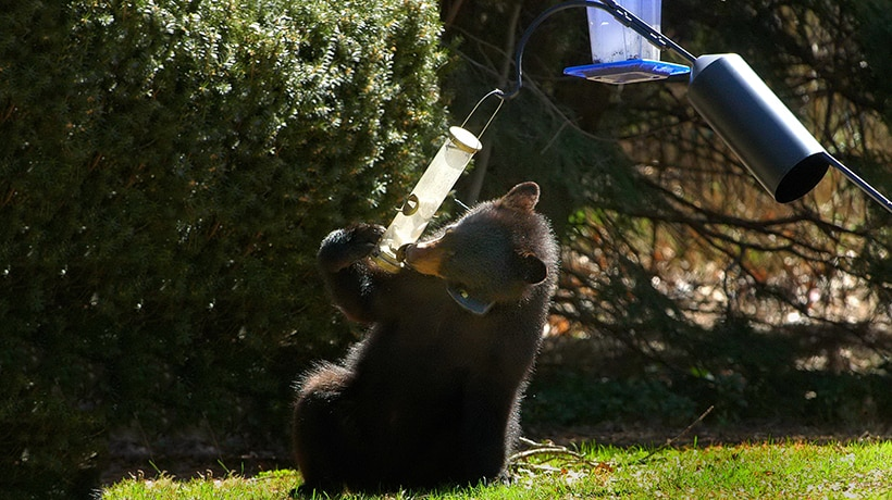 Don't feed bears. Take down your bird feeders.