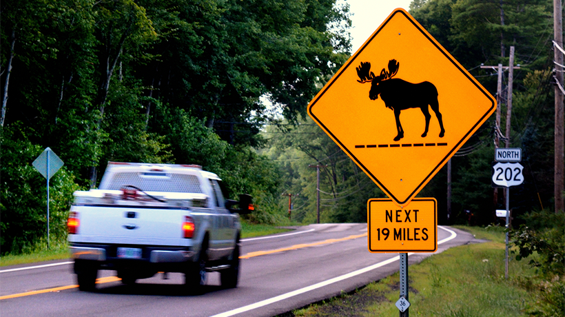 Truck driving past a moose crossing sign.