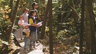 Group walking along the boardwalk through the sun-filled woods.