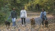 A group of friends walking their dogs down a wooded trail.