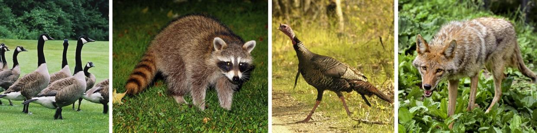 Massachusetts wildlife library   Mass gov