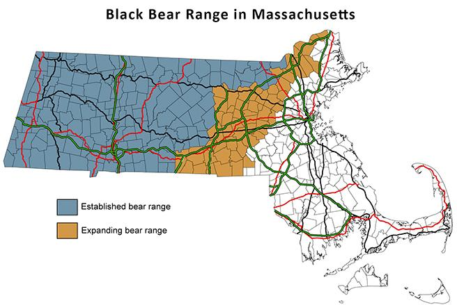 Learn about black bears
