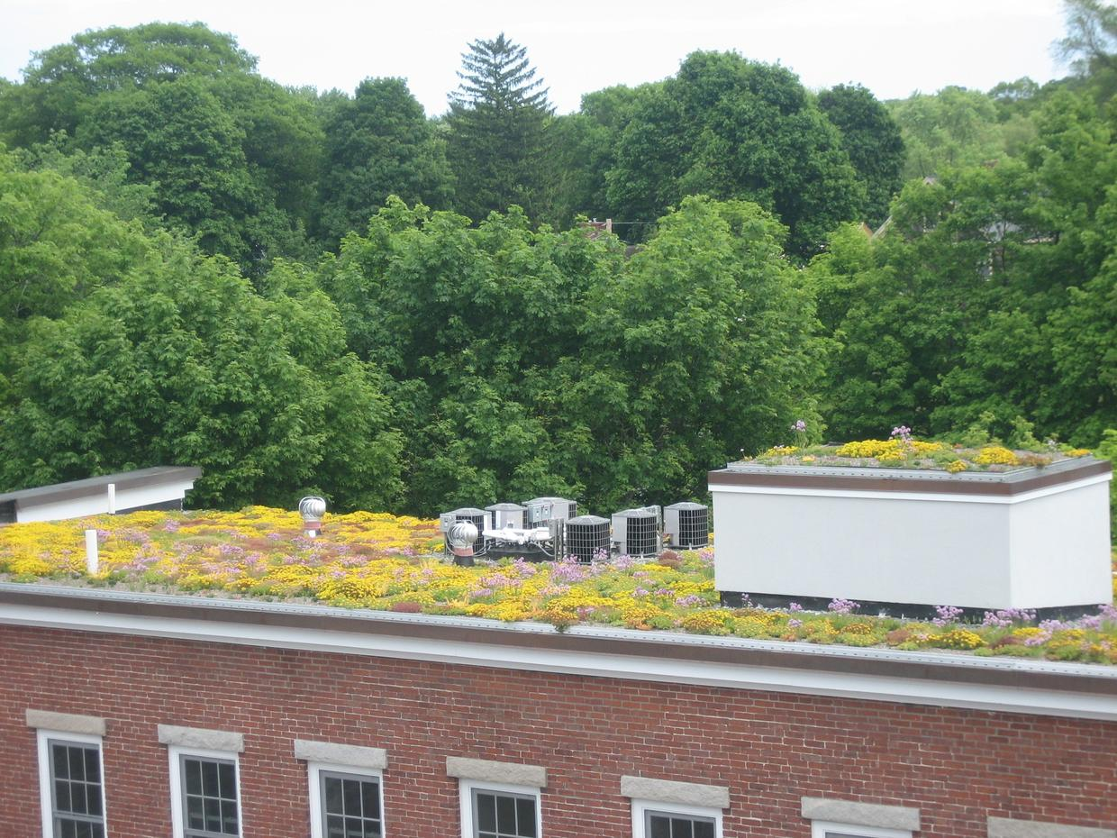 Whipple Riverview Place Green Roof, June 2008