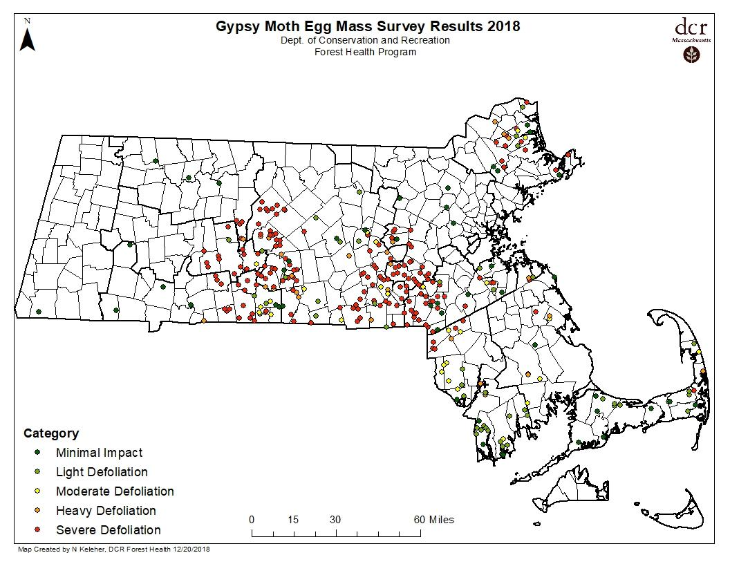 Current map on where Gypsy Moth egg masses are located in Massachusetts as of December 2018