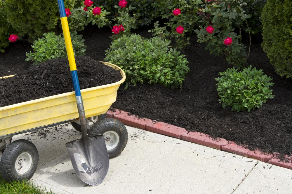 yellow wheelbarrow and mulch bed