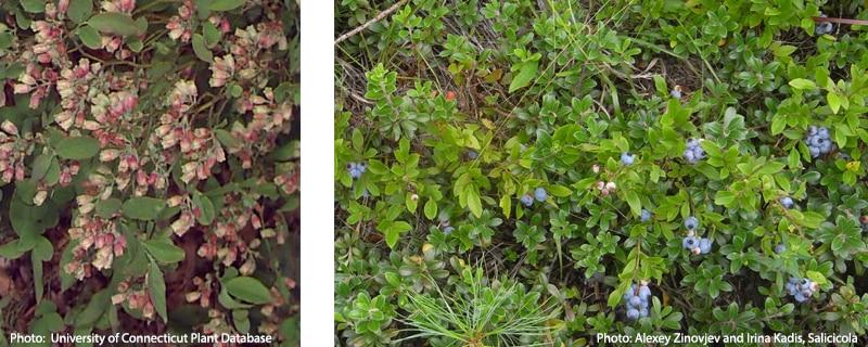 CZ-Tip - Coastal Plant Identification: Common Native and Invasive