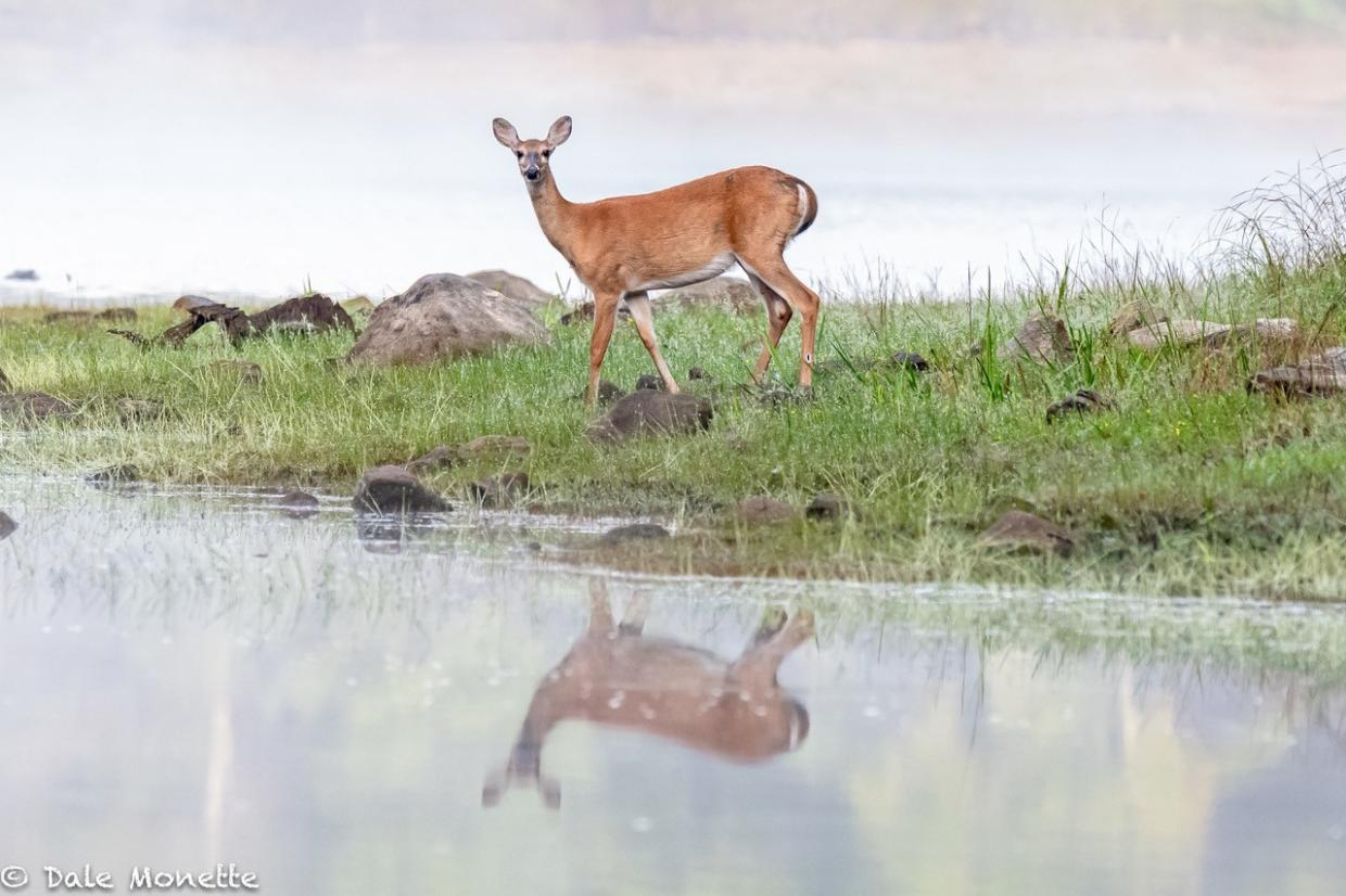 Doe reflection