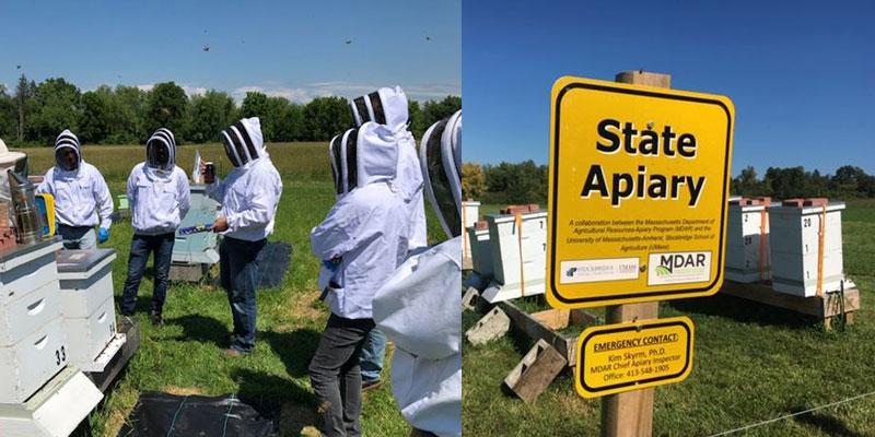 state apiaries