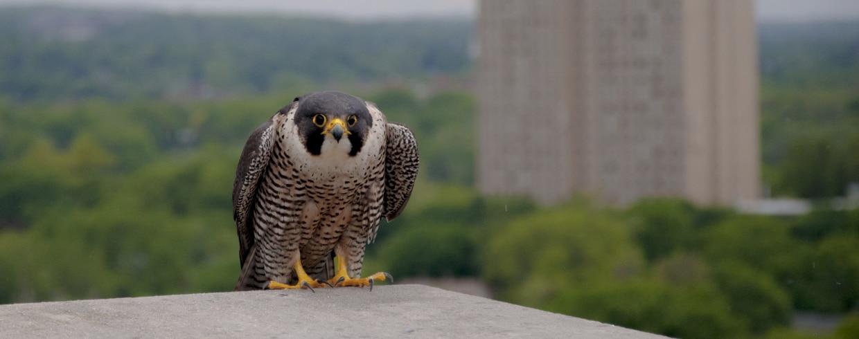 Birdwatching In Boston Mass Gov
