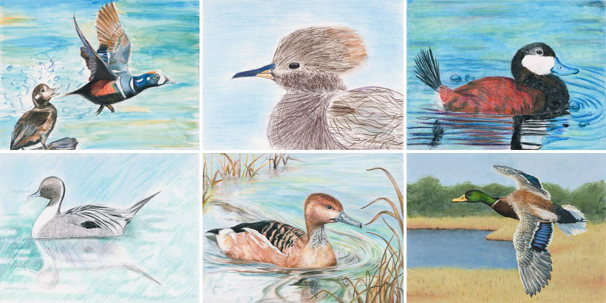 junior duck stamp sample