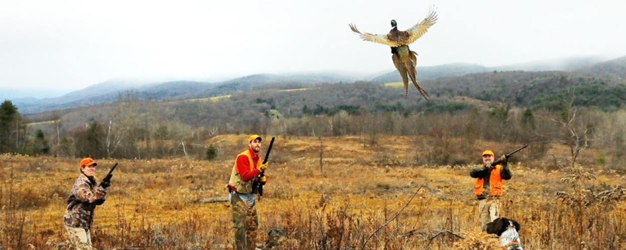Pheasant hunting regulations for Mass commercial fishing license