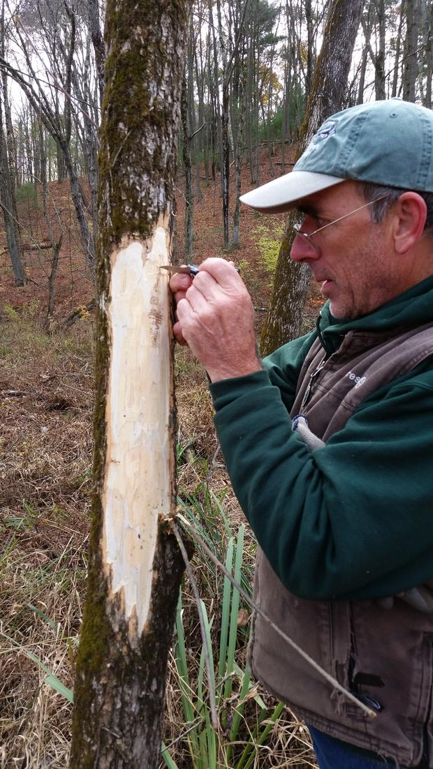 Monitoring Emerald Ash Border Infestations