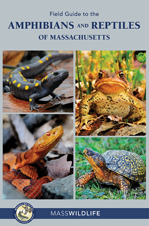 A Field Guide to the Amphibians and Reptiles of Massachusetts