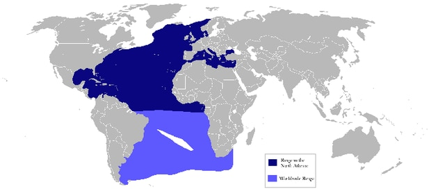 Learn about atlantic bluefin tuna for Where do fish live