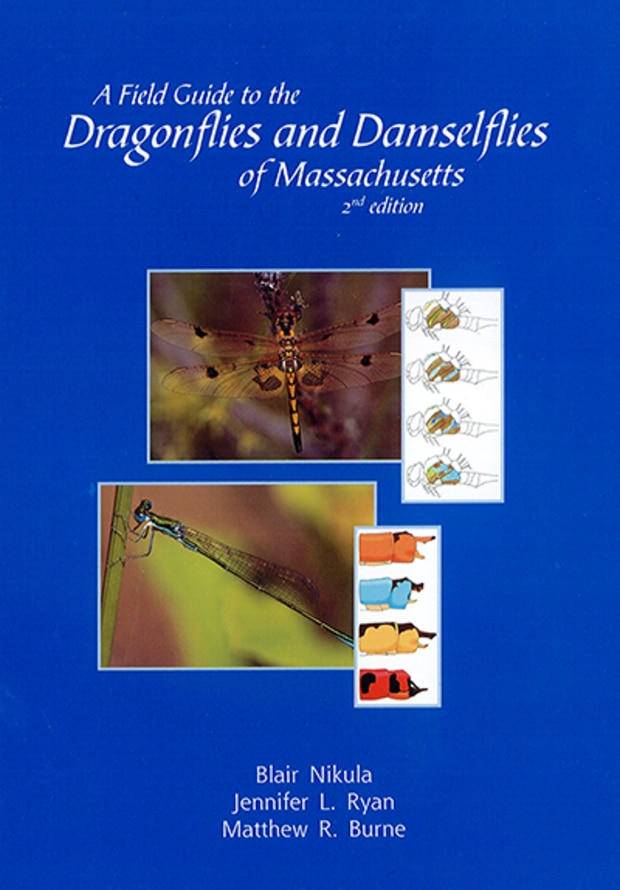 Dragonflies of Massachusetts