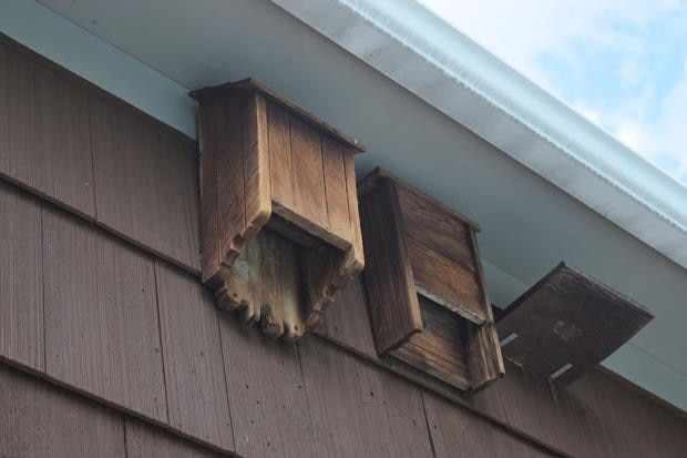 Bat houses mounted under the eaves on the side of a house. Photo by BRI/MassWildlife