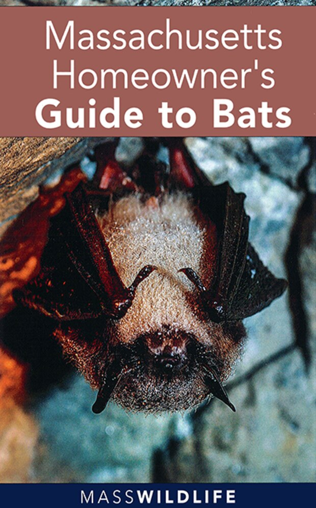 Massachusetts Homeowners Guide to Bats