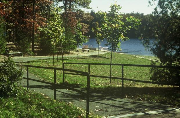 A paved walkway with handrails winds down to open water. Small, young trees are planted along the right side of the path on a gentle grassy hill. Mature trees are planted along the left side of the path, with two benches in front of them.