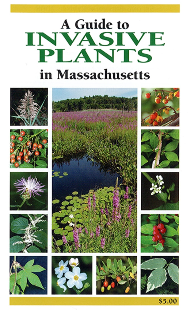 pdf format of MassWildlife Publication Order Form A Guide to Invasive Plants in Massachusetts