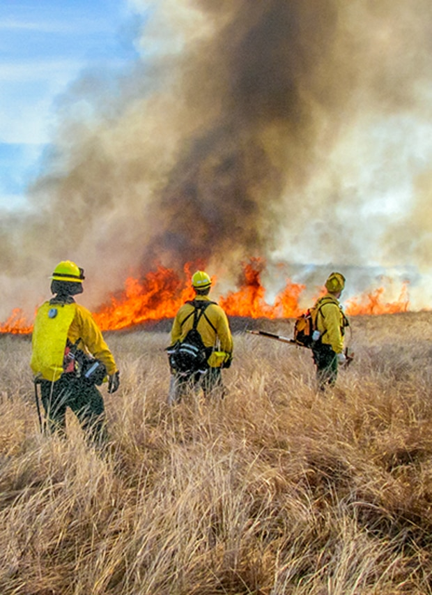 prescribed fire for habitat management