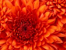 photo of a flower.