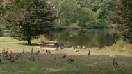 Beaver Brook Reservation