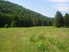 Mohawk Trail State Forest